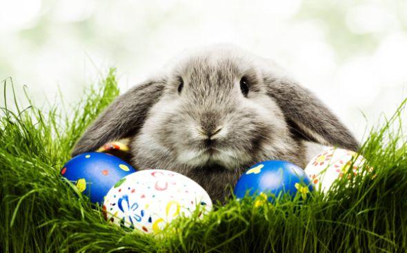 A lenda de onde vem o coelho da Páscoa e qual a sua origem possui muitas histórias e interpretações (Foto: Divulgação)